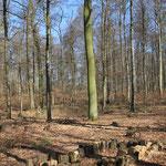 Hirschkäferwiege in der Frühlingssonne