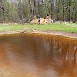 Vom Forst angelegter Amphibienteich