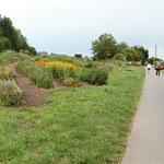Blumenfelder für Selbstpflücker