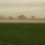 Sandsturm bei Trockenheit - Wixhausen © Hans Günter Abt