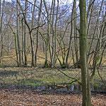 Feuchter Wald als besonderer Lebensraum