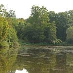 Pflanzenwuchs im Steinbrücker Teich © Hans Günter Abt