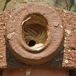 Hornissen belegen Nistkasten