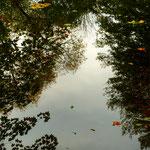 Herbstlaub auf dem Judenteich in Darmstadt © Jennie Bödeker