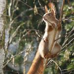 Munteres Eichhörnchen - Garten im Martinsviertel © Ulrike Borchard