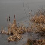 Winterliche Eisfläche auf dem See