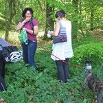 Teilnehmerinnen beim Einsammeln von Giersch