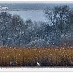 Schneefall am Reinheimer Teich © Jennie Bödeker