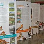 Biodiversitätsausstellung des Darmstädter Umweltamts