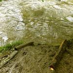 So endet der Barfussweg: Reinigung im Luppmenwasser.