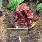 Komische Pflanze im Botanischen Garten