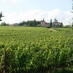 Weingut Canonica di Cerreto