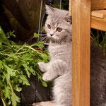 Ushi in de tuin