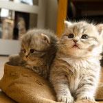 Ushi en zusje