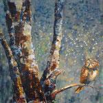 Josée Desharnais,  Owl  36 x 36