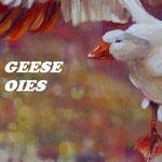 Josée Desharnais, Geese / Oies