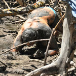 Il faut s'enfoncer dans la mangrove, et chercher très profond