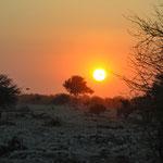 Coucher de soleil sur Etosha