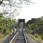 Petit train dans la Valle de los Ingenios