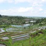 Les superbes rizières en terrasse de Jatiluwih