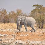 Et puis un éléphant solitaire est arrivé