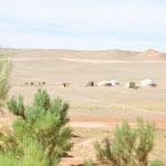 Au loin, l'image typique de la mongolie : les yourtes, les chameaux dans le désert