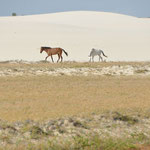 Sur la route du Desert du Lençois.