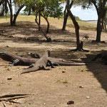 Un mâle entourée de 2 femelles. Au loin un macaque