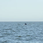 Nous avons même vu une baleine