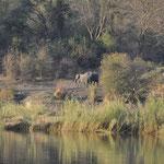 Frontière du Botswana. Nous sommes à Mahango au bord du fleuve Okavango. Devant nous des éléphants