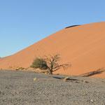 La Dune 45 vu d'en bas