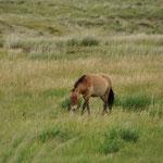 Parc Naturel de Khustain Nuruu. Elle est réputée pour la réintroduction réussie des mythiques chevaux de Prjewalski.