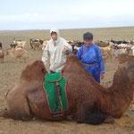 Balade à dos de chameau