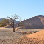 Un arbre au milieu du désert. La dune 45 en fond