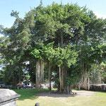 Un bamian vieux de 200 ans