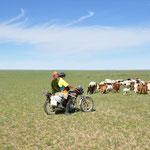 Dans ces grands espaces, la moto est la meilleure alliée pour rassembler le troupeaux