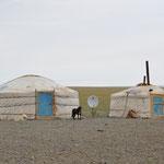 Nos premières yourtes dans la steppe