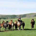 Notre hôte Byambatseren et ses chevaux. Il porte le deel