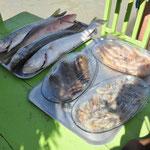 Les poissons que l'on peut manger au restaurant