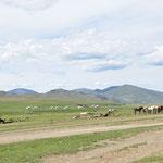 La steppe, les chevaux, les yourtes