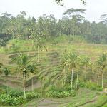 Les rizières en terrasse de Ceking