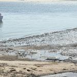 Les crabes sortent à marée basse