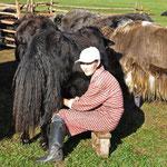 Zula trait les yacks 2 fois par jour. Les juments c'est toutes les 2 heures