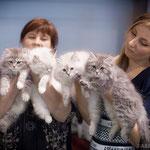 Шоу кошек аборигенных пород