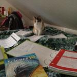 Lernen für die Examen