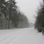 Snow Storm!