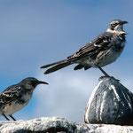 und alle gefiederten Vögel ...
