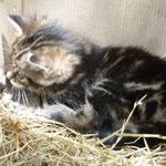Donne chaton contre bons soins ...