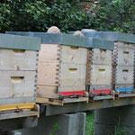 Einer unserer Bienenstände in Dürnbach im Burgenland