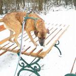 Sheena beim Winterspaziergang, E.Toninger